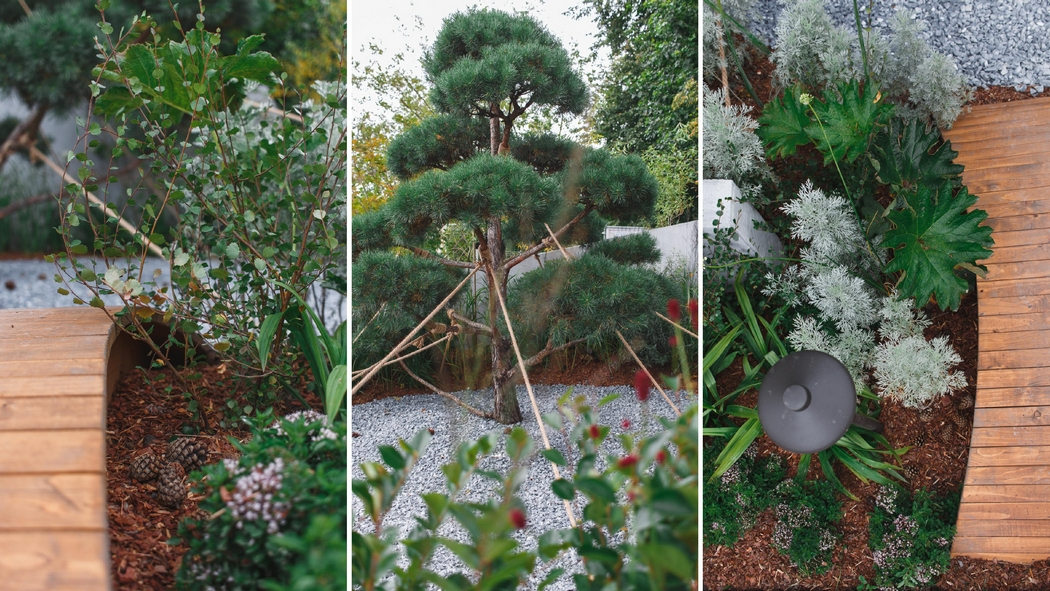 Сады и люди 2020